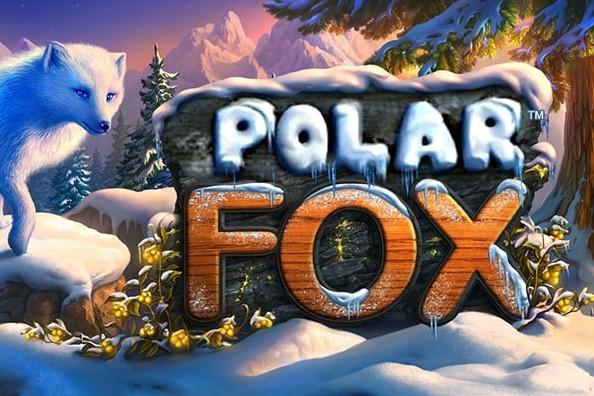 polar fox za darmo